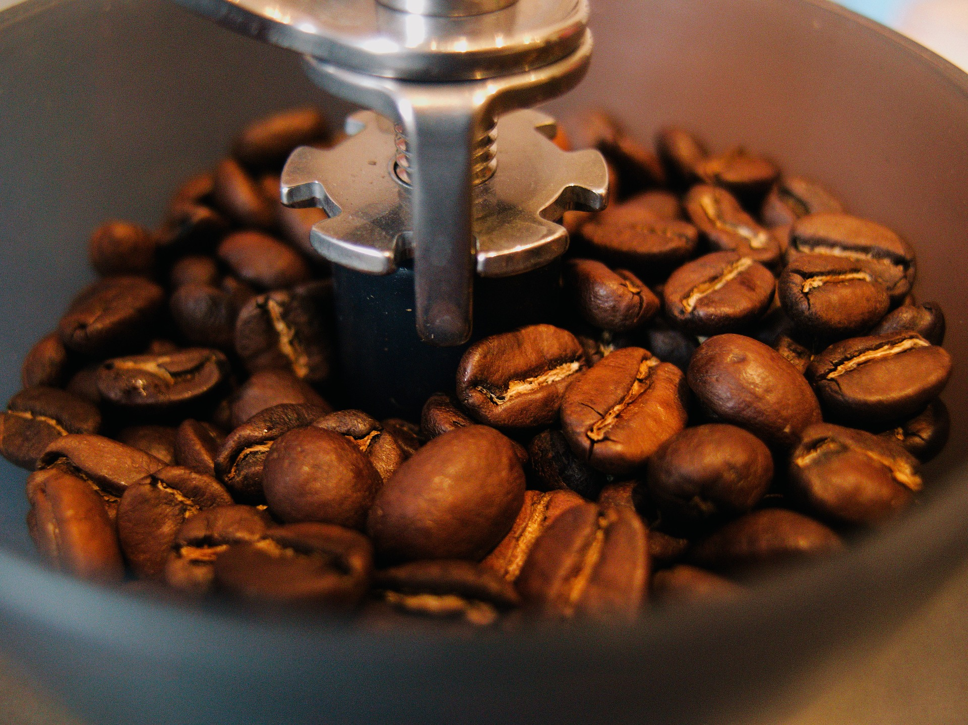 Types Of Coffee Beans And Its Main Commercial Varieties